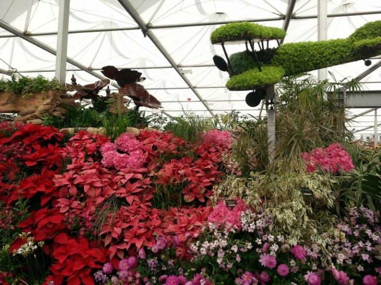 chelsea-flower-show-14