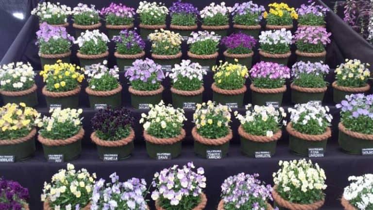 chelsea-flower-show-2